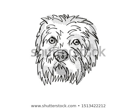 Dandie Dinmont Terrier Dog Breed Cartoon Retro Drawing Stock photo © patrimonio
