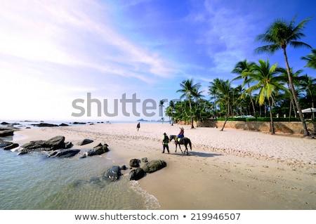 Tengerpart Thaiföld gyönyörű nyár nap fa Stock fotó © bloodua