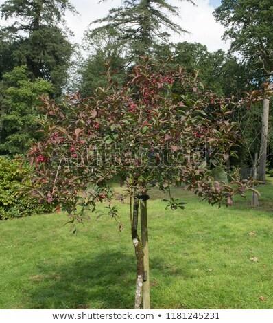 Jardin feuillus arbres automne couleurs dynamique Photo stock © lovleah
