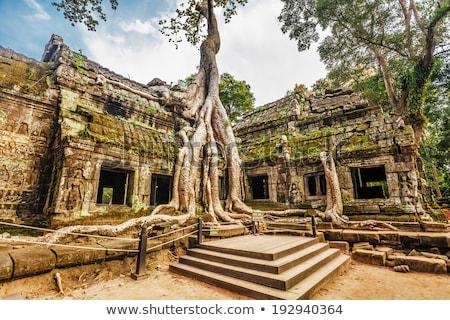 Stock fotó: Kambodzsa · Angkor · templom · ősi · fa · romok