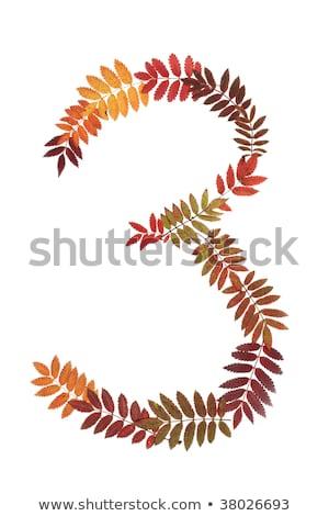 Numeral three 3 put from autumn sheet stock photo © RuslanOmega