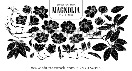 Black retro Flowers silhouette isolated on white background Stock photo © lordalea