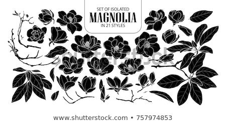 bağbozumu · kumaş · siyah · beyaz · ayrıntılı · dizayn · çiçek - stok fotoğraf © lordalea