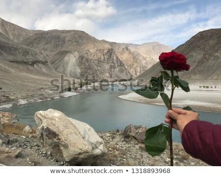 Tart piros rózsa romantikus díszlet naplemente égbolt Stock fotó © photocreo