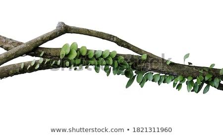 Közelkép kilátás levél fa fa zöld Stock fotó © azamshah72