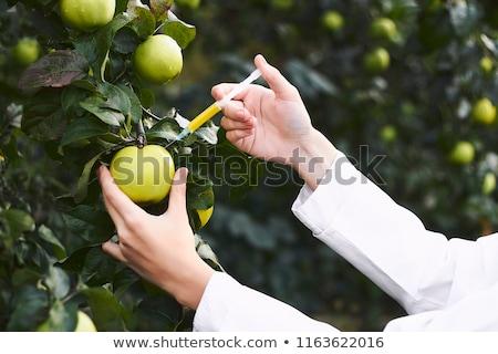 maçã · manipulação · seringa · bio · genética · pesquisa - foto stock © grafvision