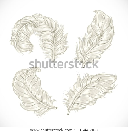detail of white ostrich feather Stock photo © jirkaejc
