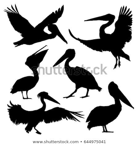 silueta · fondo · aves · negro · libertad · blanco - foto stock © perysty