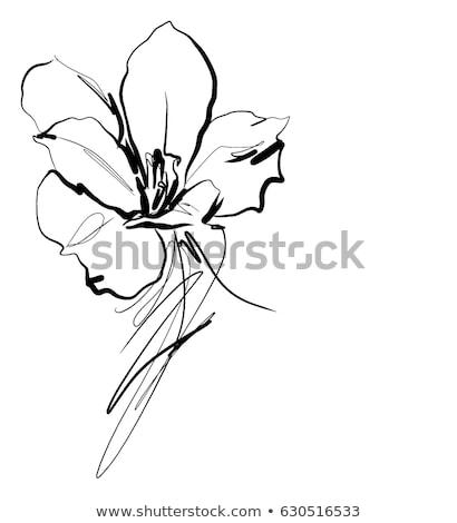 美しい 抽象的な 花 行 白い花 デザイン ストックフォト © Vitalius