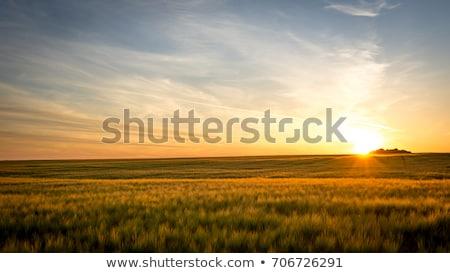 sötét · este · égbolt · zöld · mező · viharos - stock fotó © fesus