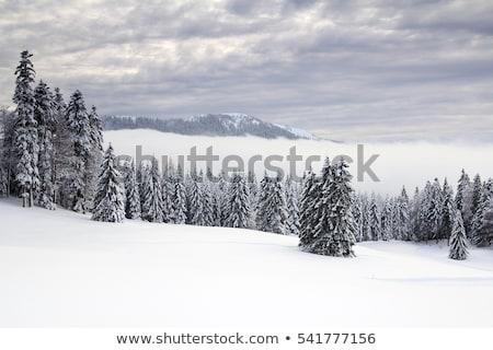 ель · деревья · зима · путь · землю · красивой - Сток-фото © elenarts