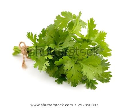 Primer plano tiro cilantro hojas naturaleza fondo Foto stock © inxti