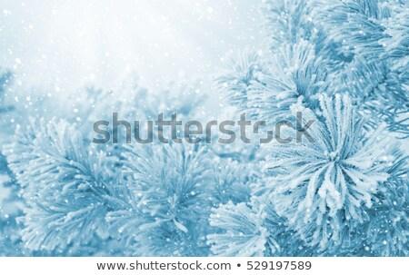 Bevroren bloem takje winter sneeuwval mooie Stockfoto © Anterovium