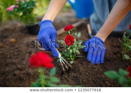 Hand with rubber glove and garden rake Stock photo © Grazvydas