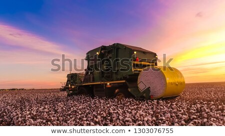 Cotton harvest Stock photo © Stocksnapper