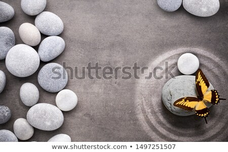 Large Butterfly on a Rock Stock photo © rhamm