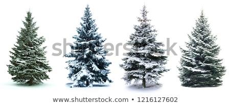 Geïsoleerd christmas pijnboom sneeuw hout natuur Stockfoto © vichie81