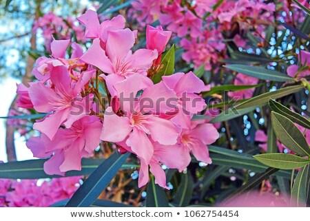 çiçek bahar doğa yaprak arka plan Stok fotoğraf © haraldmuc
