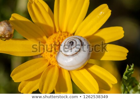 cochlea in the sunlight  Stock photo © OleksandrO