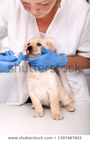 gelukkig · dierenarts · labrador · controleren · omhoog · kantoor - stockfoto © wavebreak_media