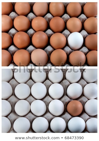 white and brown eggs collage duality visible minority stock photo © flariv