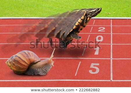 интеллектуальный черепахи лапа лист пространстве Сток-фото © sharpner