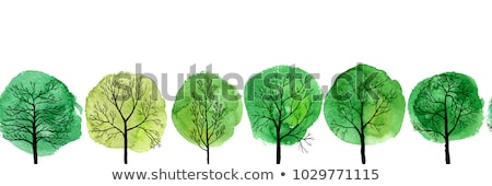 deciduous tree sketch stock photo © prill