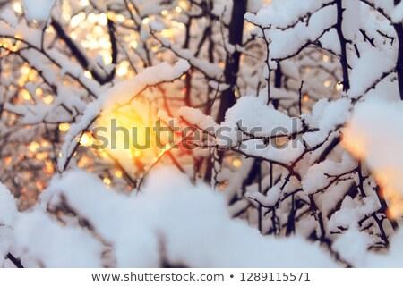 Kış güneş park ağaçlar sahne Rusya Stok fotoğraf © Steffus