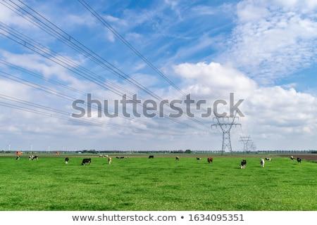 Foto d'archivio: Alta · tensione · elettrica · cielo · blu · nube · rete · industria