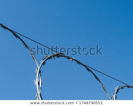 Borotva drót szögesdrót felső kerítés biztonság Stock fotó © dcslim