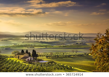 Chianti landscape with olive trees Stock photo © LianeM