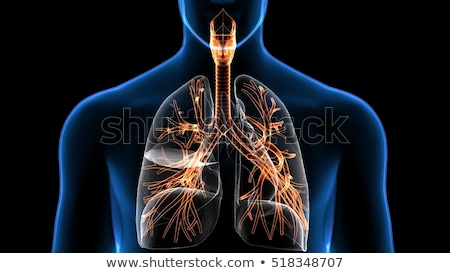 Respiratory System Stock photo © bluering