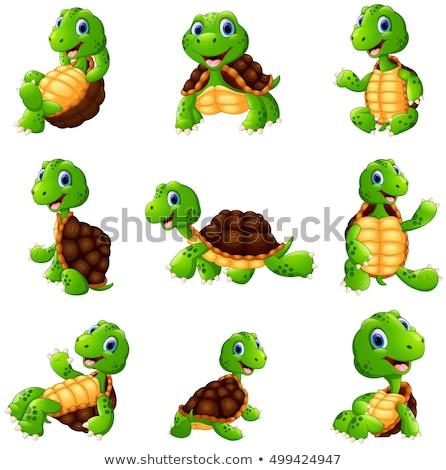 Turtle posing series Stock photo © zurijeta