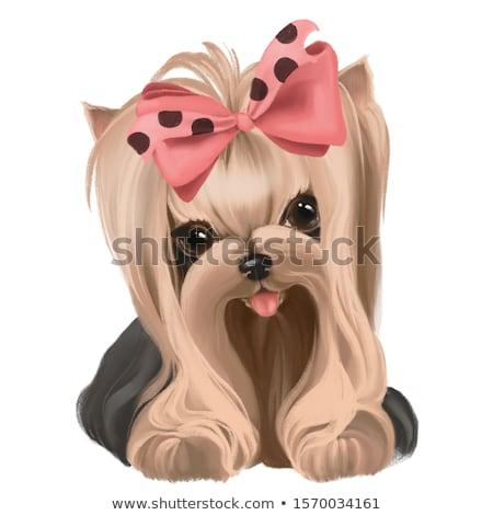 cute · szczeniak · patrząc · psa · piętrze - zdjęcia stock © pressmaster