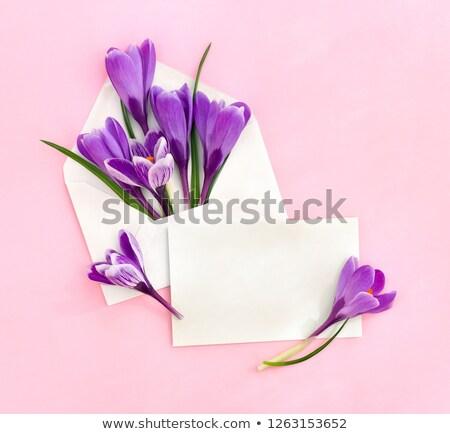 первый · весенние · цветы · букет · Purple · изолированный · белый - Сток-фото © vapi