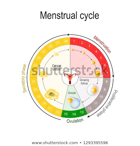 menstrual cycle fertility chart stock photo © cteconsulting