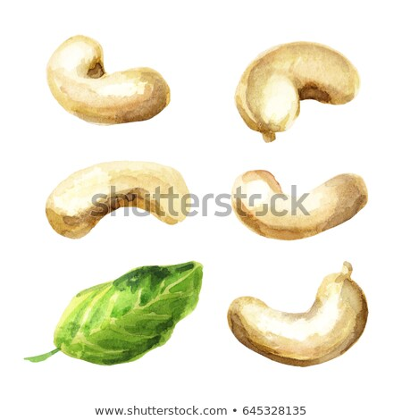 Watercolor illustration of cashew Stock photo © Sonya_illustrations