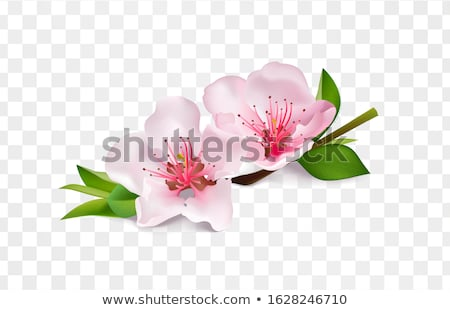 sweet apple blossoms stock photo © zela