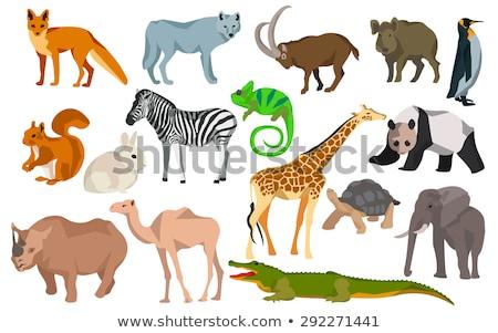 colorful Rhino silhouette. Flat style. Stock photo © alexmillos