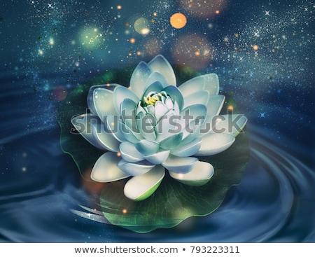Magie Lilie Blume dunkel Wasser Stock foto © zven0