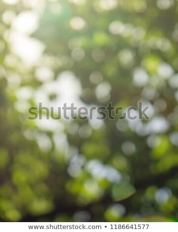 Természetes napos fényes elmosódott bokeh zöld Stock fotó © artjazz