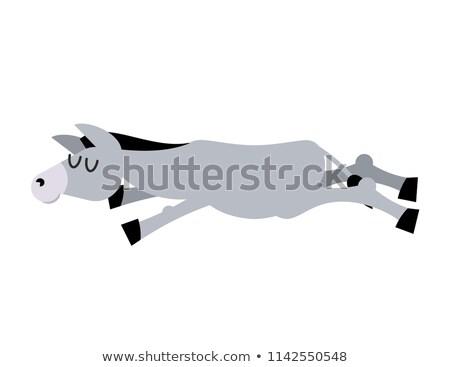 sleeping donkey animal is asleep sleep ass stock photo © popaukropa
