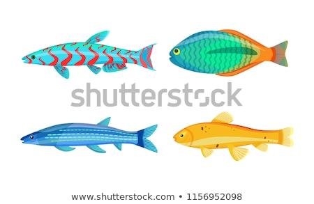 Mackerel Blue Fish Zebra Mbuna Vector Illustration Stock photo © robuart