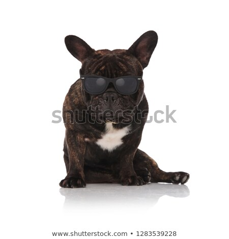 black frnch bulldog wearing sunglasses sitting and looking down Stock photo © feedough