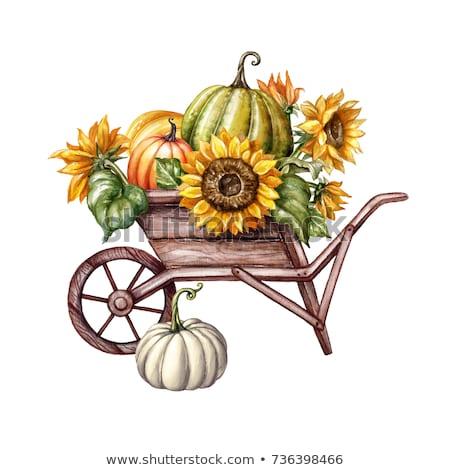 Carrinho de mão colheita ilustração completo como Foto stock © lenm