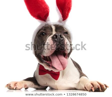 Stílusos amerikai vicces arc visel piros nyúl Stock fotó © feedough
