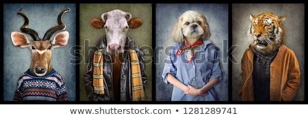 Animal heads Stock photo © colematt