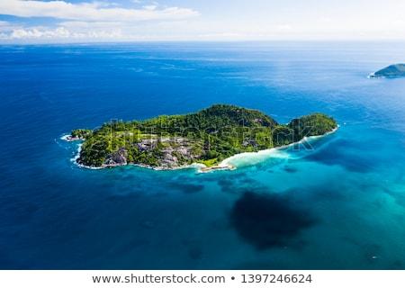Stockfoto: Schildpad · eiland · Seychellen · palmbomen · strand · hemel
