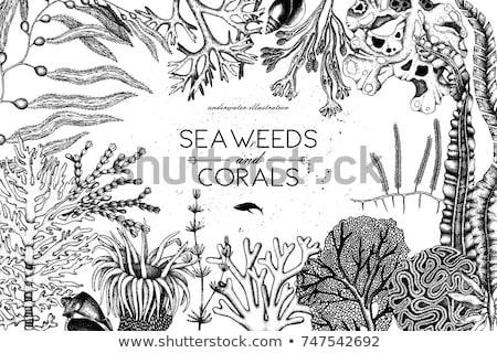 Decorativo alga de coral vintage vector subacuático Foto stock © pikepicture