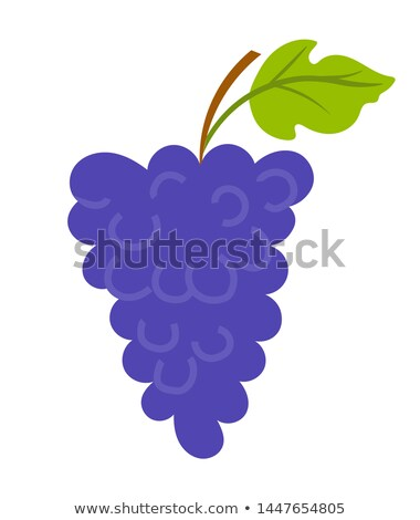 Grapes with Leaf and Wooden Stick, Vineyard Vector Stock photo © robuart